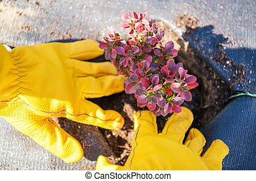 Planting Garden Plants