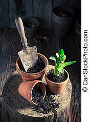 Planting green plants in the rustic cottage