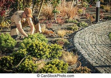 Planting New Garden Trees