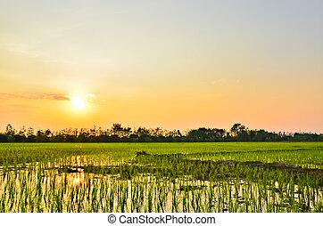 Planting rice in light evening.