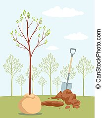 Planting sapling tree in orchard