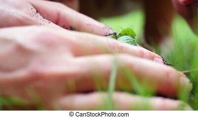 Planting, seedling, Close up of woman's and child's hands...