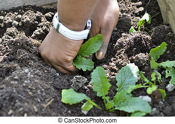 planting seedlings in a summer garden