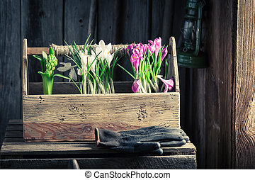 Planting spring flowers in the rustic cottage