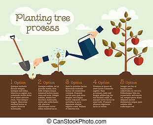 Timeline Infographic of planting tree process, flat design