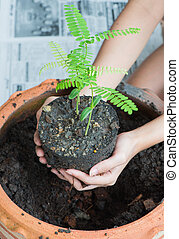 Planting trees at home, Woman's hand holding a young plant