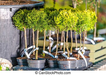 Planting Trees in the Garden