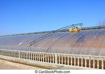 planting vegetable greenhouse