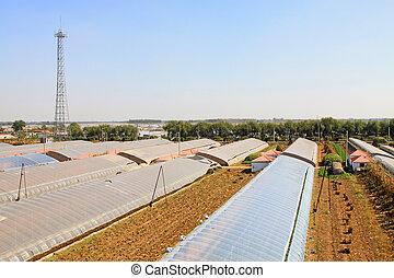Planting vegetable greenhouse planform