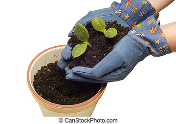 Planting Young Plants