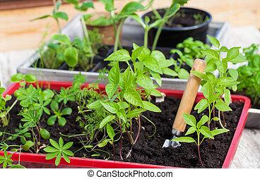 Plantlets, seedlings, plant cultivation
