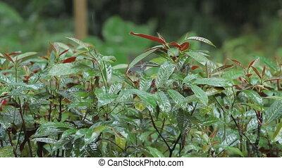plants, дождливый, season., singapore., тропический, яркий, зеленый, rain., под, лес