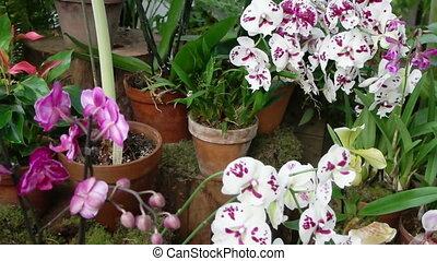 plants, тропический, orchids, другие, blooming