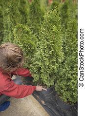 plants., -, 女, 所有者, arborvitae., 取得, セール, 小さい, 緑, 環境, 実生植物, 支部, 心づかい, ビジネス, から
