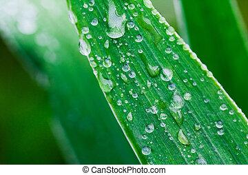 Plants after a rain