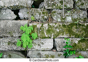 Plants and Block Wall #1