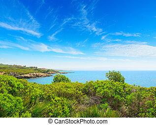 green plants by the sea in Alghero, Sardinia
