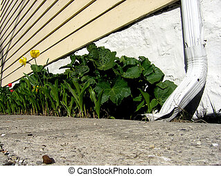 Plants and downspout - Green plants behind a twisted...