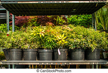 Plants And Flowers For Sale In Garden Center.