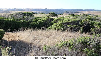 Plants and hills California - Nature view plants and hills...