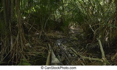 Plants and jungle trees shot