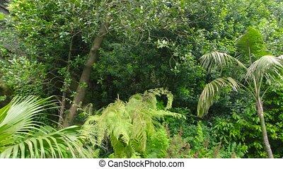Plants and rock. Beautiful lush greenery. Information on...