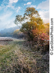 plants and trees on frosty autumn morning. lovely rural...