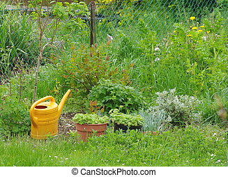 Plants and watering can in garden