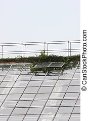 Plants Breaking Through The Roof