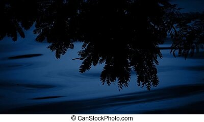 Plants By The Water At Night - Plants in the shade by...