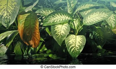 Plants By The Water In Rainforest - Tropical plants with...