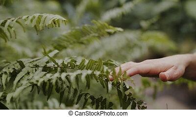 plants., chercheur, jardin, botanique, explorer, debout,...