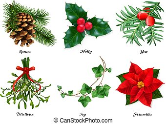 Plants, Christmas decorations. Spruce, holly, yew, mistletoe...