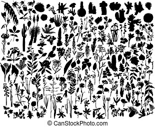 Plants - Collection of different garden vector silhouettes ...