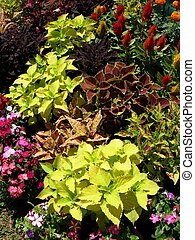 plants, coloruful