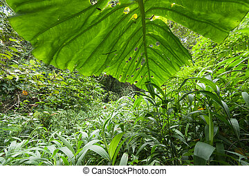 plants cover the ground of the natural forest