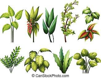 Plants - Different kind of plants