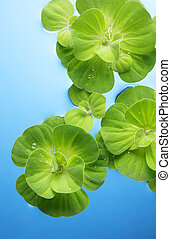 plants floating on water - green plants with dew floating on...