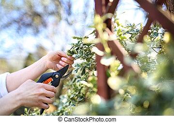 plants, garden., gardening., забота