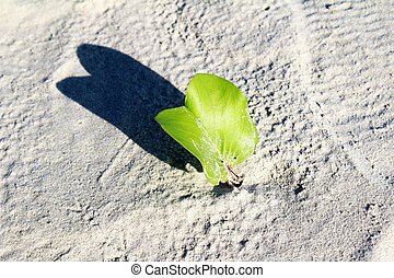 plants growing on sand