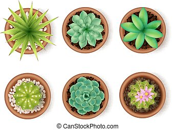 Plants Icon Set