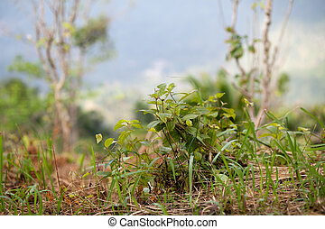 plants in a tropical rain forest