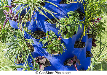 Plants in container