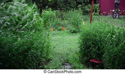 Plants in garden swaying in wind