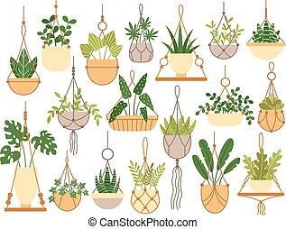 Plants in hanging pots. Decorative macrame handmade hangers ...