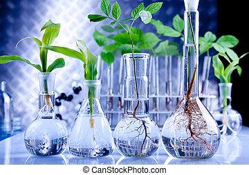 Plants in lab - Genetically plants