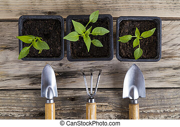 Plants in pots and gardening tools