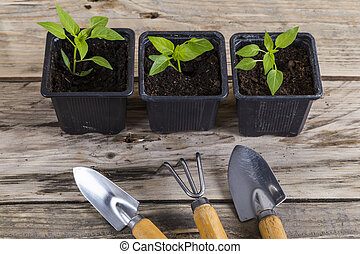 Plants in pots with gardening tools