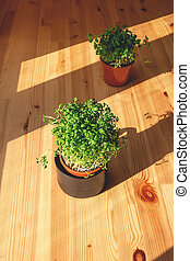 Plants in same pots on wooden background.