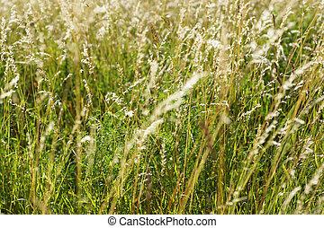 Plants in the field.